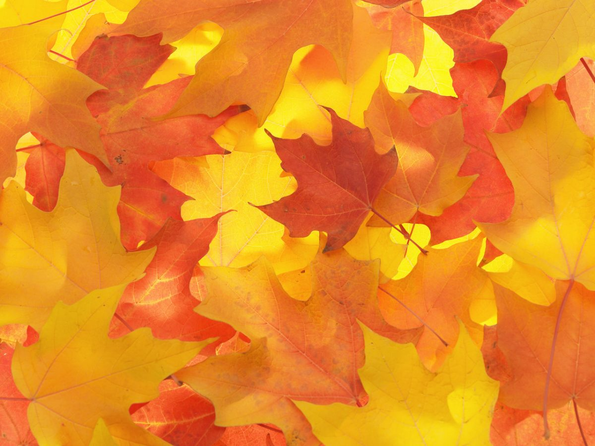 Pretty orange leaves